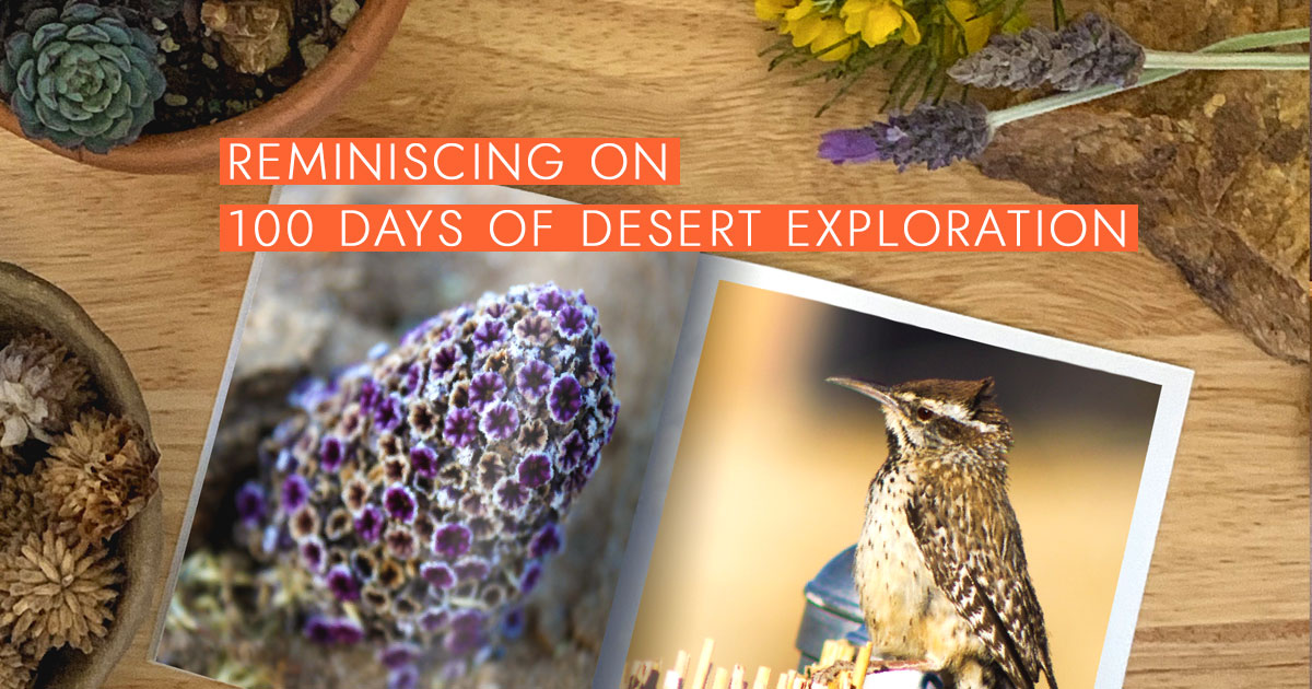 Reminiscing on 100 Days of Desert Exploration